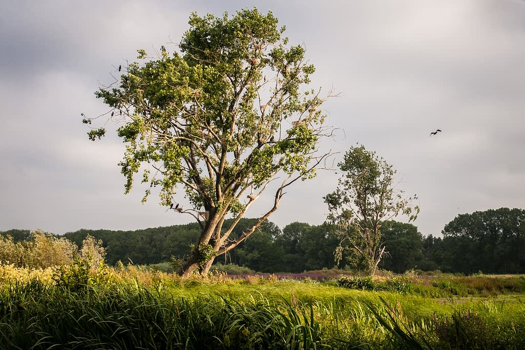 Bourgoyen, natuur, park, Gent, Drongen, Mariakerke